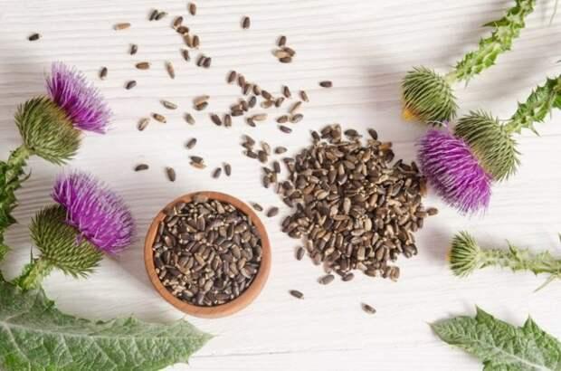 Продукты и травы для клеточного омоложения печени
