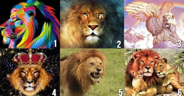 Выбранный лев подскажет, какой мужчина нужен вам по жизни