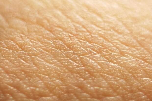 15 познавательных фактов о нашем теле