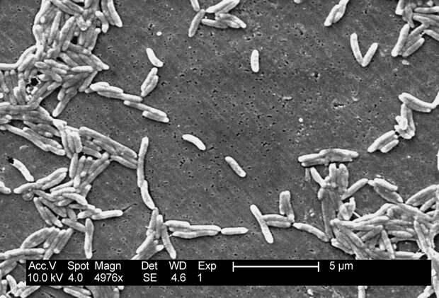 Хомяк как биооружие: болезни из зоомагазина.