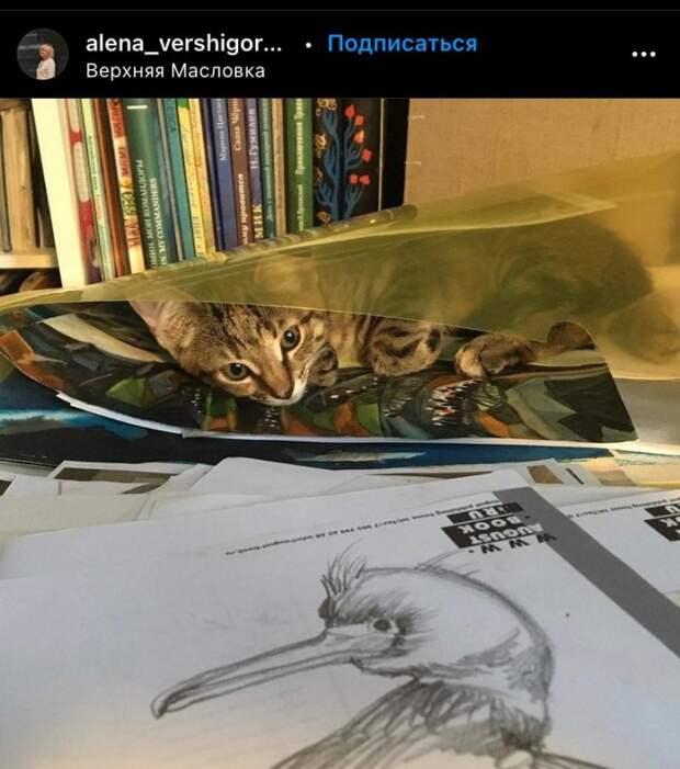 Фото дня: кот-наблюдатель на Верхней Масловке