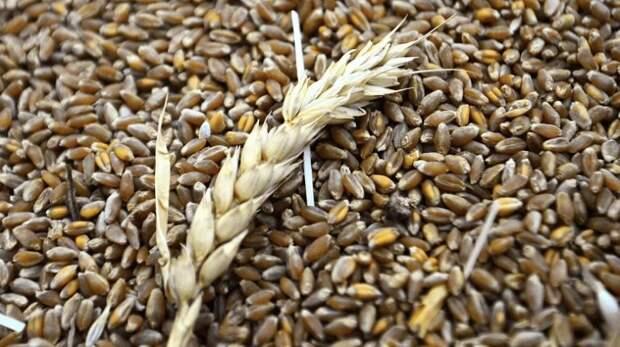 Россия отнимает рынок зерна у стран Запада