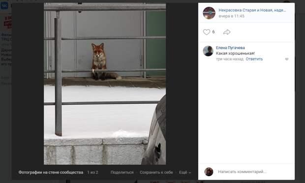 Скриншот из группы «Некрасовка Старая и Новая» социальной сети ВКонтакте. Автор фото: Елена Морозова