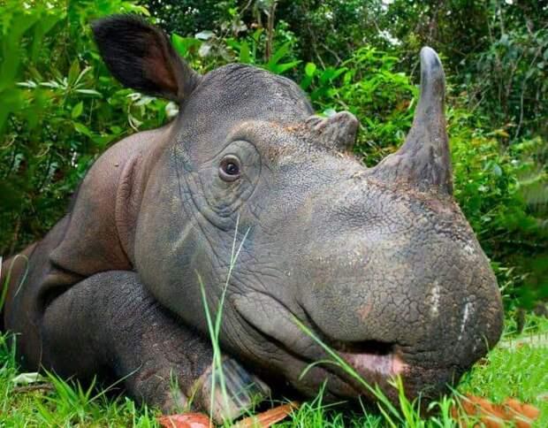 Редкие животные нашей планеты: 15 фото