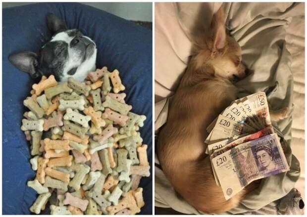 Ученые выяснили, что собаки видят во сне, и растрогали нас до слез