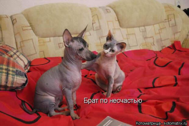 kotomatritsa_H (1) (700x466, 291Kb)