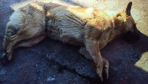 Четырех бездомных собак отловили на Шамотной улице в Подольске