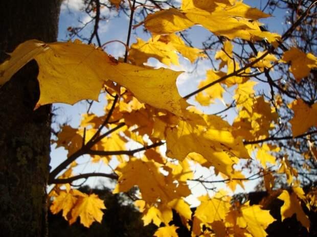 Тепло и преимущественно без осадков: какой будет погода в Удмуртии 7 октября
