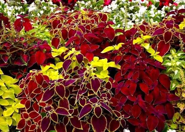 Мартовские посевы цветов