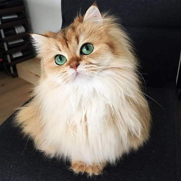 Подборка самых милых и очаровательных котиков
