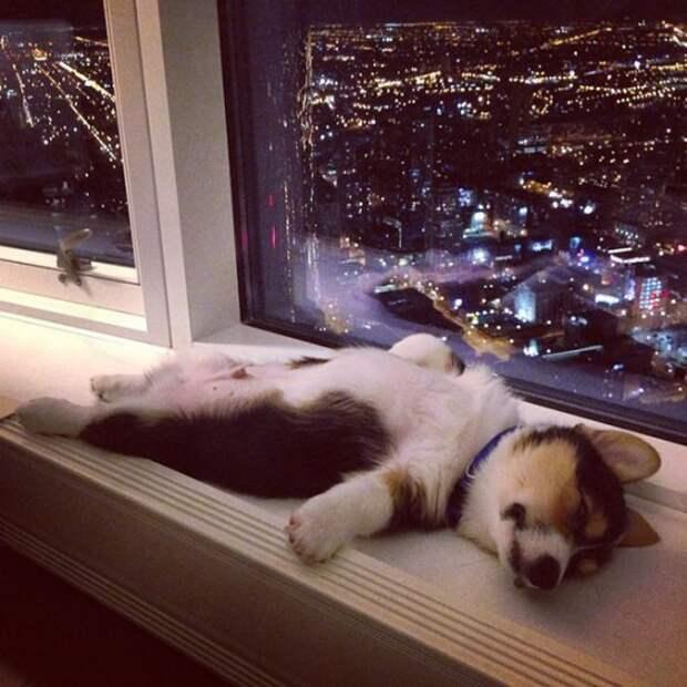 Иван Пигарёв: Во время сна мозг оценивает физическое состояние тела и занимается самолечением.