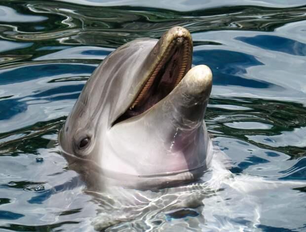 Дельфиненок попросил туристов в Италии спасти свою маму и попал на видео