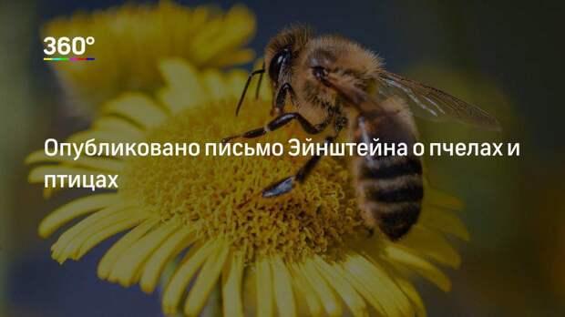 Опубликовано письмо Эйнштейна о пчелах и птицах