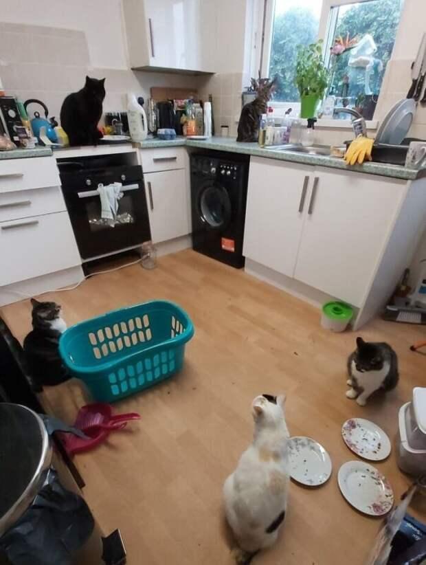 40 случаев, когда коты забрели вдом клюдям ирешили остаться