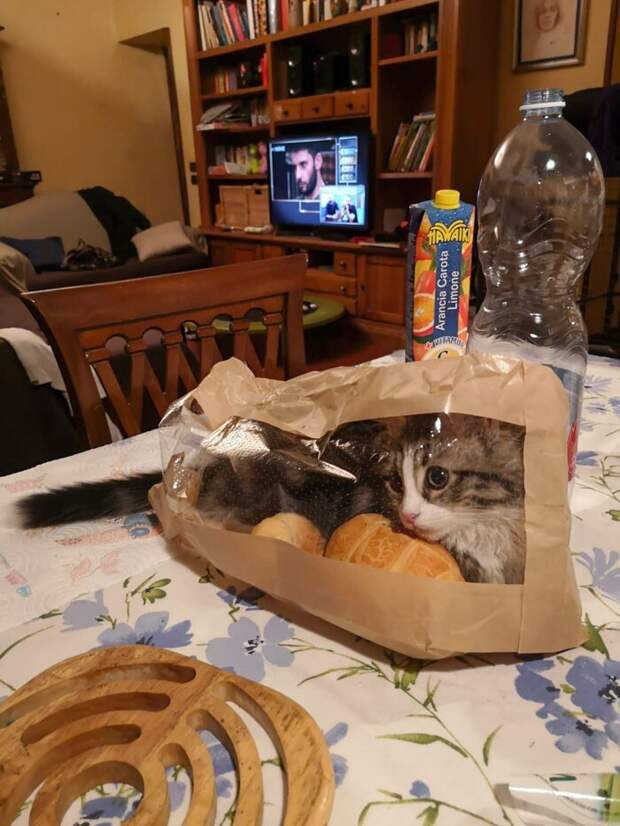 Сама наглость: коты, которые плевать хотели нанормы хорошего поведения