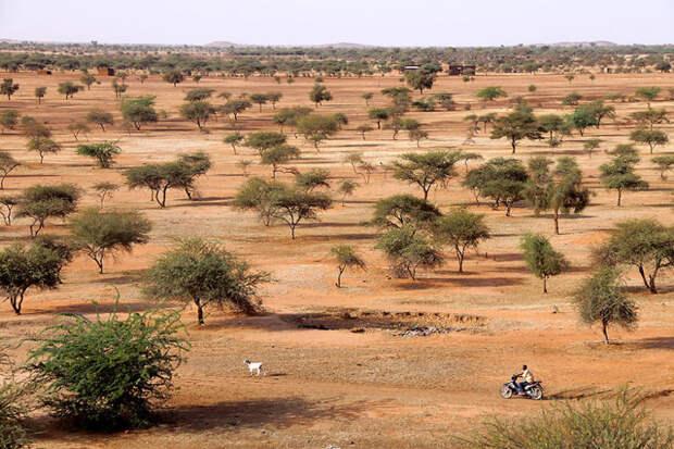 Буш. Гором Гором, Буркина-Фасо красота, путешествия, фото