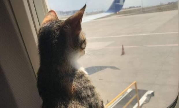 Нововведения РЖД: услуга для животных и новый мега комфортабельный поезд