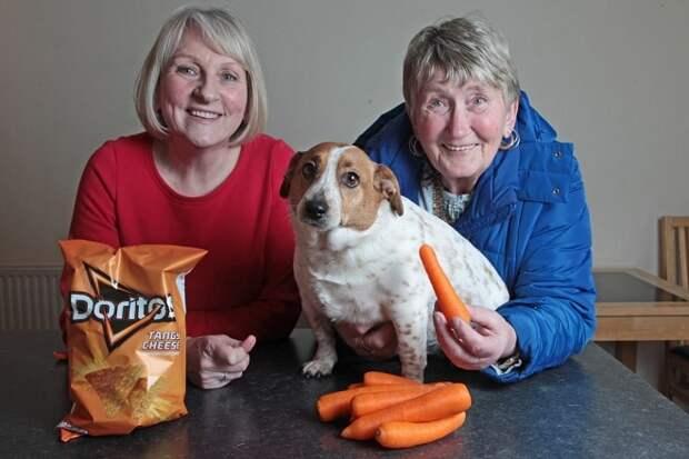 Люди и собака