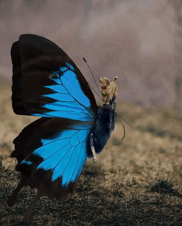 Параллельная вселенная бабочка, баттл, милота, пес, подборка, собака, фотошоп