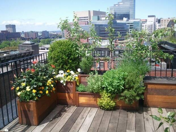 Создание сада на крыше: пустая трата денег или можно сделать качественно и долговечно