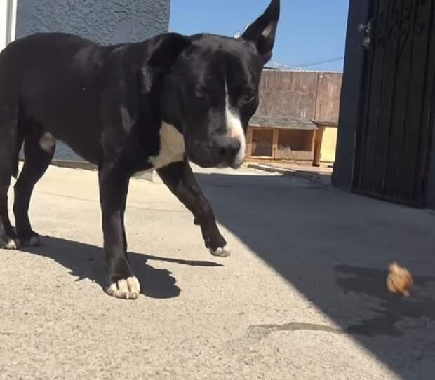 К волонтерам подскочила собака, которая оказалась ласковой. А вот второй пёс нервничал, потому что был болен