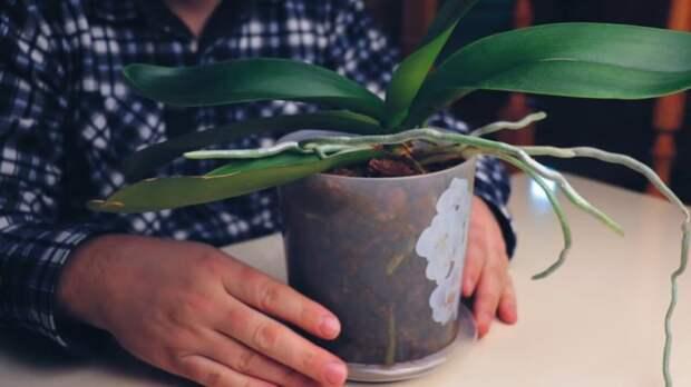 Лучшая подкормка для орхидей