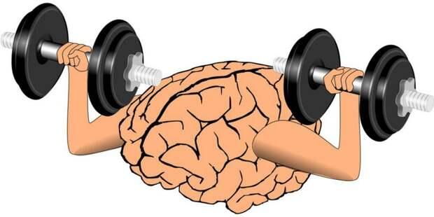 Бесплатный «тренинг для мозга» устроят на Дубнинской