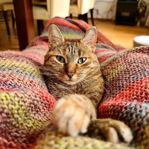 Как кошка иеечеловек совершают кругосветку навелике