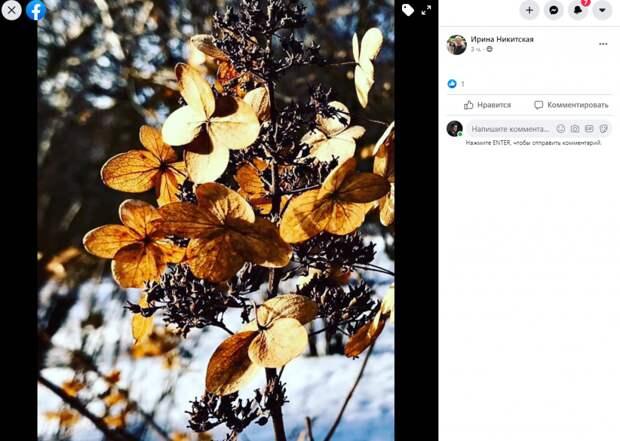 Фото дня: снежные кусты в Свиблове усыпаны «бабочками»