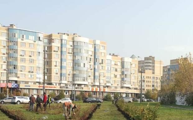 Строгинский бульвар украсили кизильником, а Ландышевую улицу – барбарисом