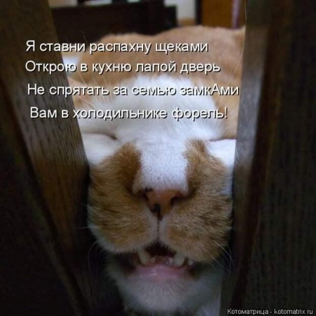 1451492475_kotomatritsa_m-1