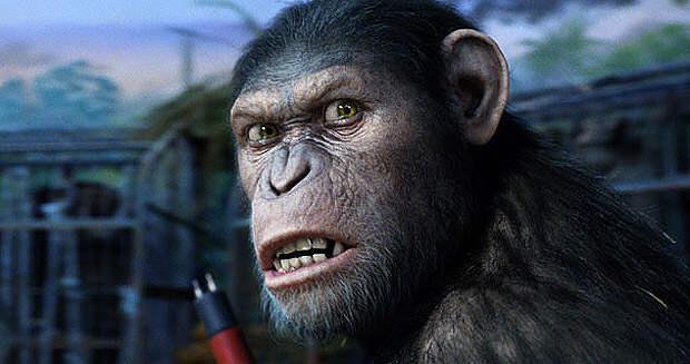 В Крыму обезьяна чуть не загрызла беременную туристку