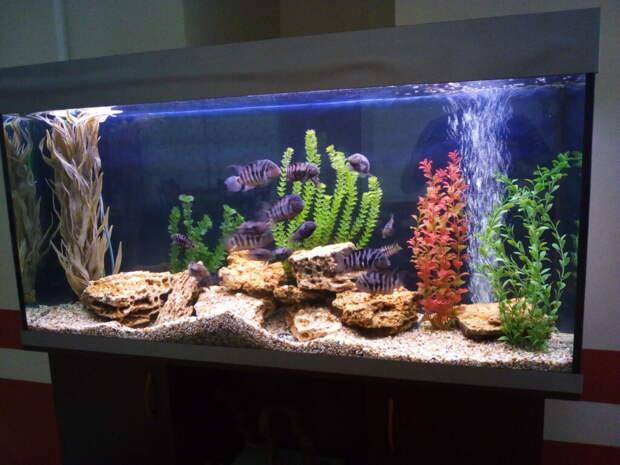 Как выбрать место для установки аквариума