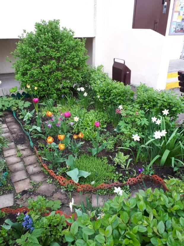 Жители многоэтажки на Псковской превратили свой двор в ботанический сад