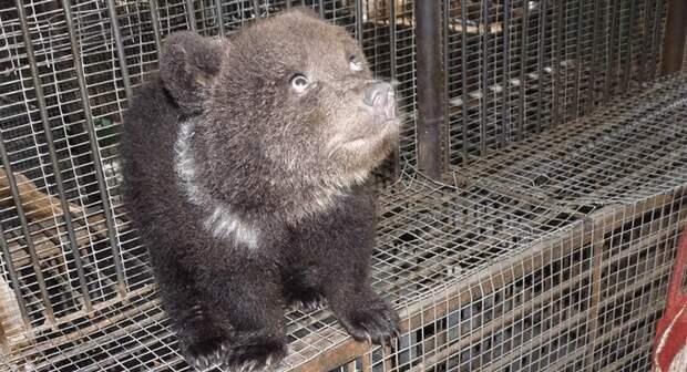 Скрытная медведица омского зоопарка несколько месяцев скрывала медвежат от персонала