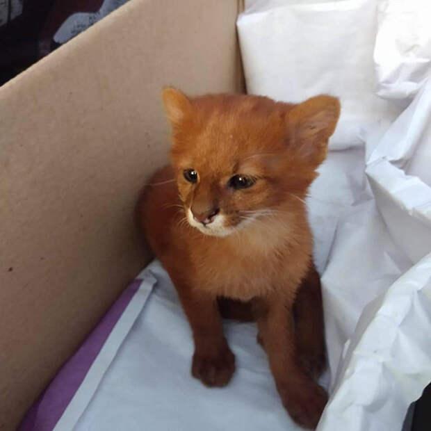 Котенок, которого подобрала на дороге молодая девушка, оказался совсем не котом