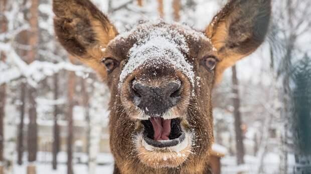 Определены виды животных, которые могут смеяться