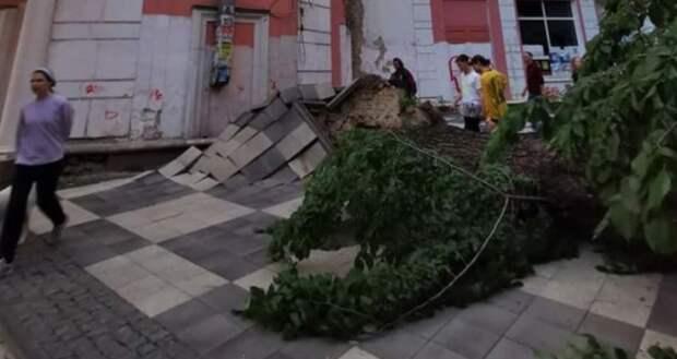 Огромное дерево чудом никого не задавило в самом центре Симферополя