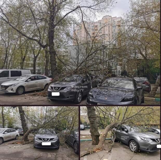 Огромная ветка дерева упала на машину на улице Клары Цеткин