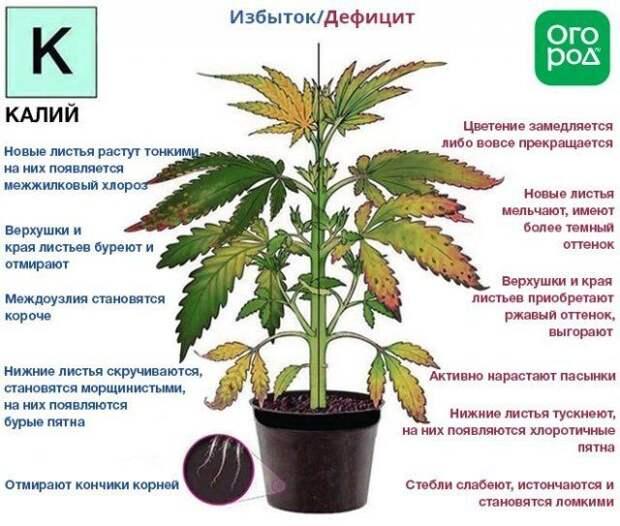 Признаки дефицита и избытка калия у растений