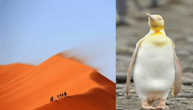 Песок из Сахары достиг берегов Антарктиды?