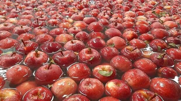Более 18 тысяч тонн яблок планируют собрать крымские аграрии