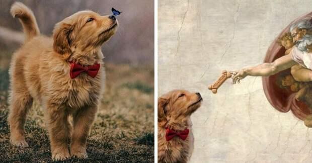 Бабочка села на нос пса с красной бабочкой, и этот кадр дал начало неожиданно доброму фотошоп-баттлу бабочка, баттл, милота, пес, подборка, собака, фотошоп