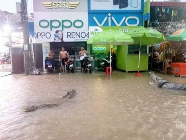 Крокодил в городе во время наводнения