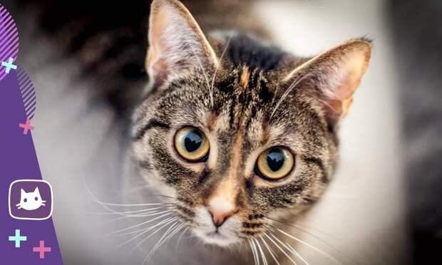 Почему кошка долго и пристально смотрит в лицо человеку