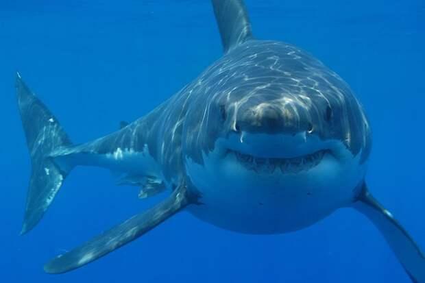 Акулы-камикадзе: самые провальные зоопроекты Пентагона