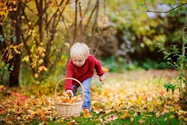Как правильно собирать листья