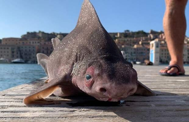 Рыбаки поймали странное существо смордой свиньи