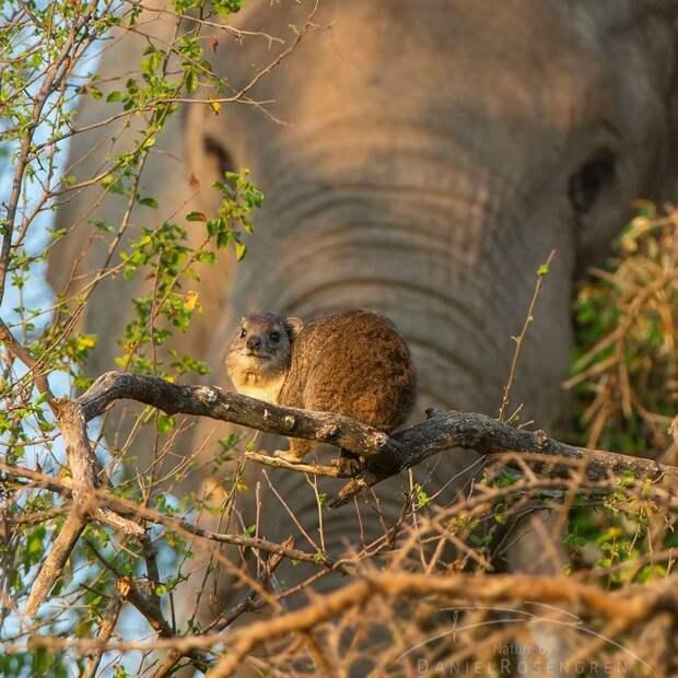 Знаете ли вы, что эти два животных довольно тесно связаны между собой?