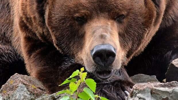 Романтическое свидание медведей сняли с дрона